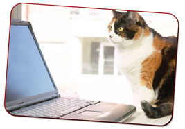 Cat-beside-laptop-computer