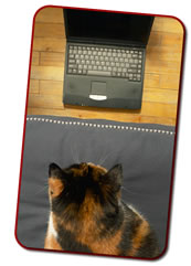 Cat-staring-laptop