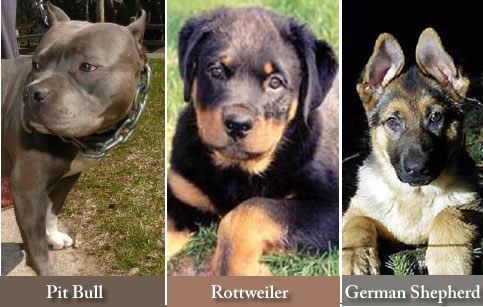 Different dog breeds a...